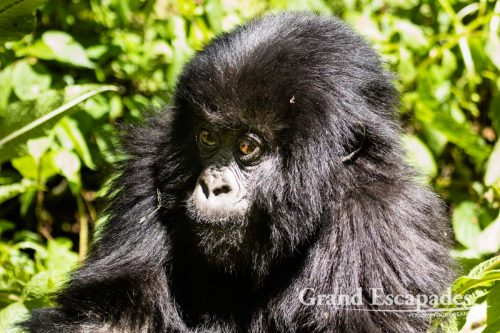 Travel Guide To Rwanda